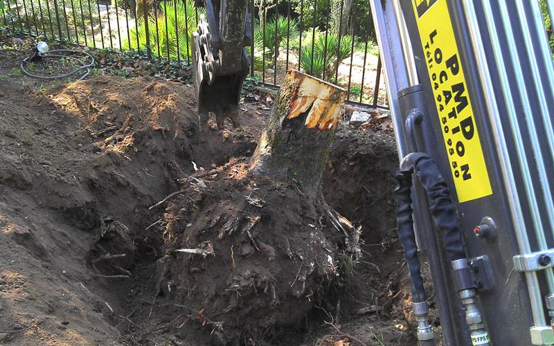 Abattage d'un arbre à Draguignan