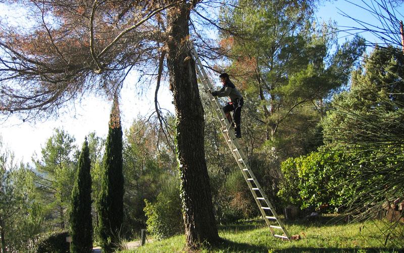 élagage d'un arbre dans le var
