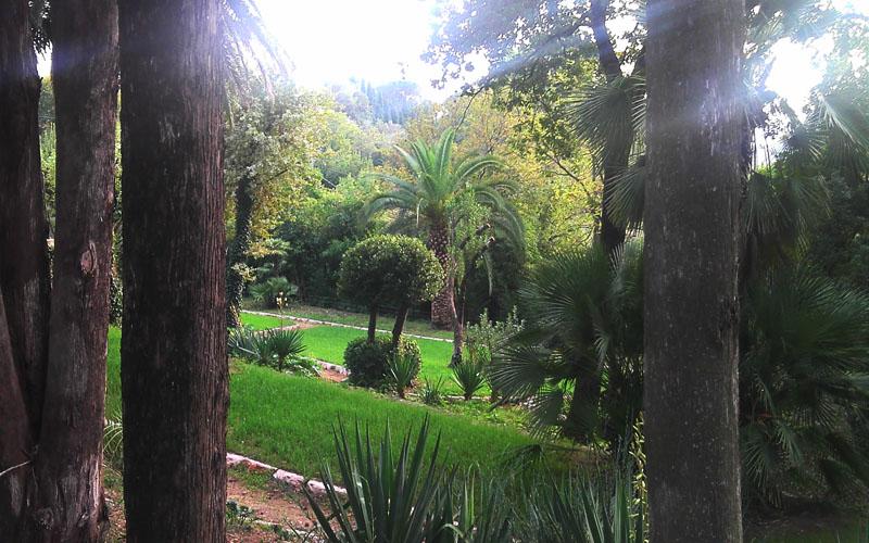 Paysage de jardin aménagé