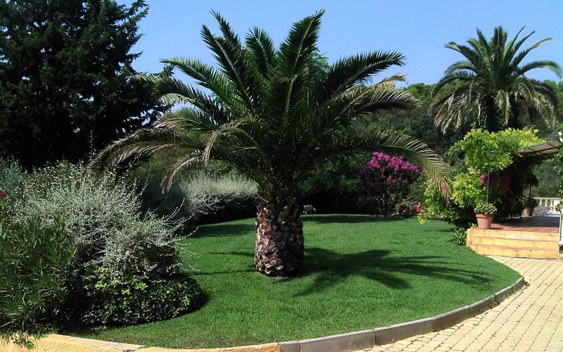Palmier dans un jardin créé par notre paysagiste